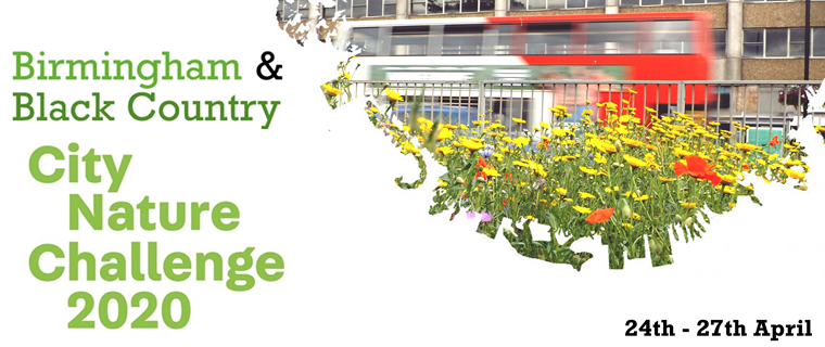Help Dudley compete in the City Nature Challenge from home